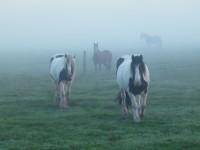Frühmorgens im Nebel